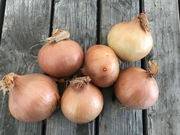 Shop extras onion1kg