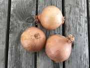 Shop extras onions500g