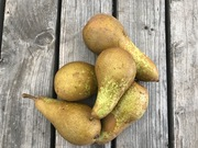 Shop extras pears